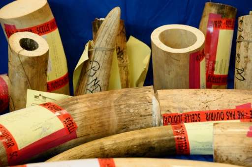 Earlier this year French customs seized over 350kg of ivory tusks in less than a week, an 'exceptional' seizure and the most imp