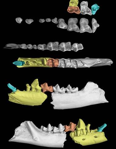 Earliest-known treeshrew fossil found in Yunnan, China