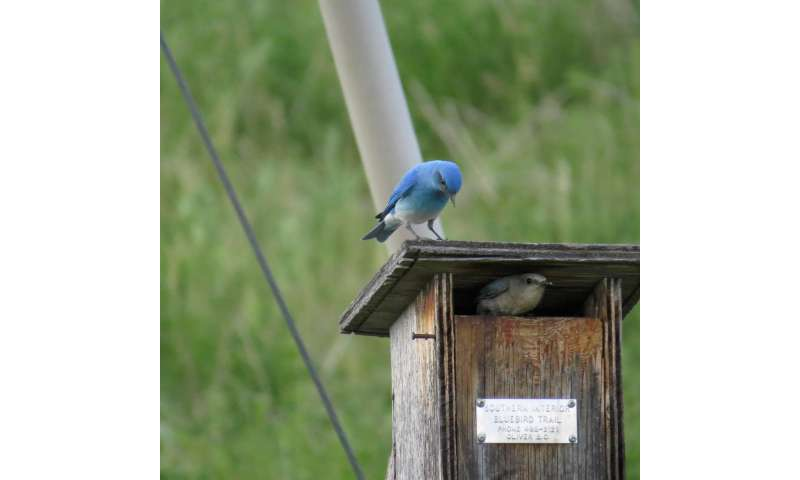 Early arrival gives bluebirds an edge in keeping nest sites