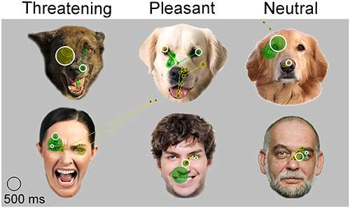 Emotions matter—dogs view facial expressions differently