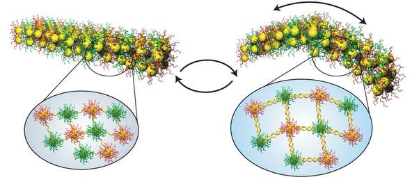 Engineers make nanoscale 'muscles' powered by DNA