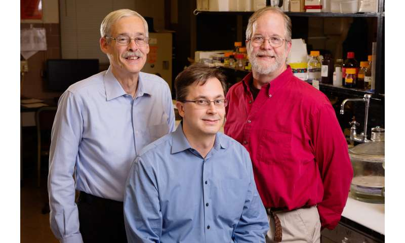 Enzyme that digests vitamin A also may regulate testosterone levels