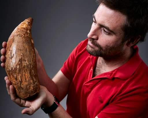 Erich Fitzgerald, a paleontologist at the Museum Victoria, holds an extinct sperm whale tooth found on a beach near Melbourne