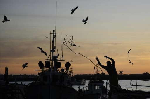 European Union ministers have agreed to cuts in Baltic cod catch quotas that fall well short of calls by scientists worried abou