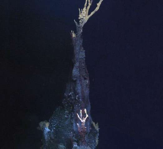 Exciting new creatures discovered on ocean floor