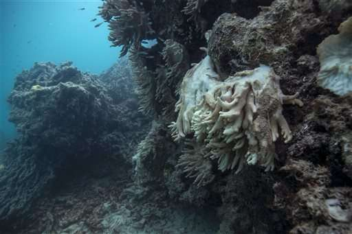 Experts demand more effort to save coral reefs