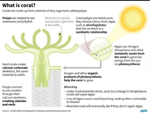 Factfile on corals and coral bleaching.