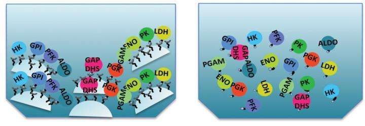 Fast, efficient sperm tails inspire nanobiotechnology