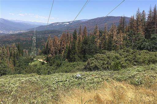 Feds: Drought kills 66 million trees in California's Sierra