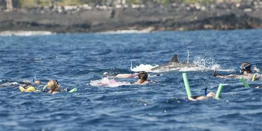 Feds seek rules for swims with Hawaii dolphins