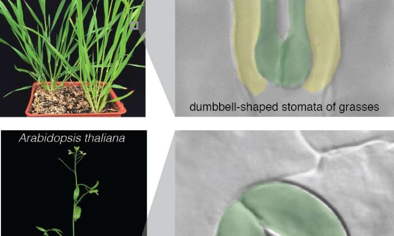 Feeding the world by rewiring plant 'mouths'