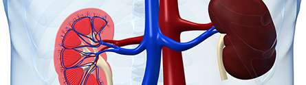 Few chronic kidney disease patients at risk from end-stage disease