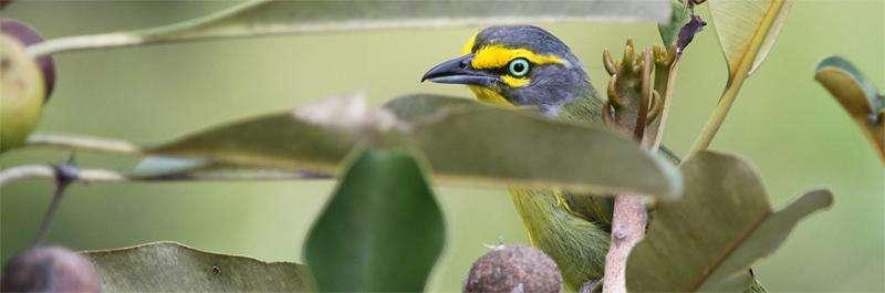 Fighting deforestation alone fails tropical biodiversity