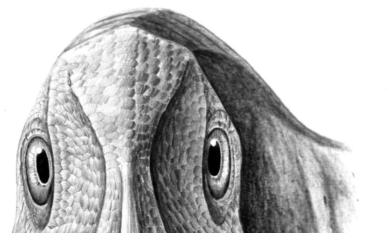 First fossil facial tumour discovered in a dwarf duck-billed dinosaur from Transylvania
