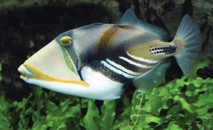 Fish can be fooled – just like humans