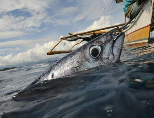 Fishermen reported that 59 fish species had gone missing from catches since the 1950s, according to a new biodiversity study