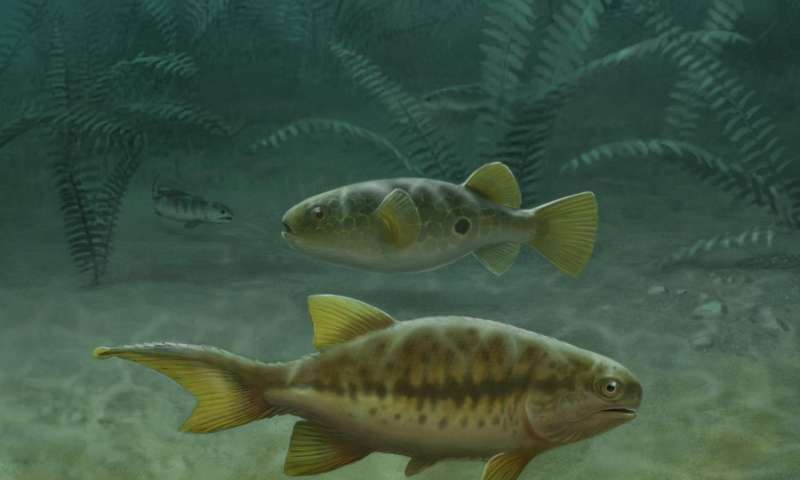 Fish fossils reveal how tails evolved, Penn professor finds