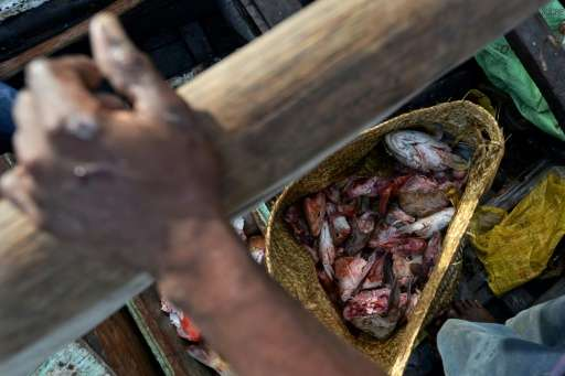 Fishing became the main source of income after tourism collapsed near Kenya's Pate Island following a spate of kidnappings by pi