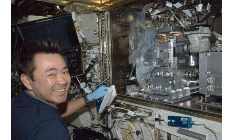 Fishing for answers on bone loss in space