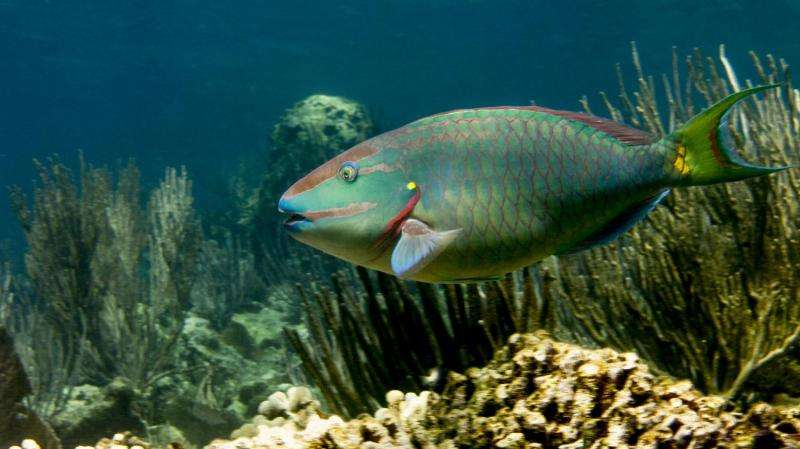 Fishing for the future of coral reefs