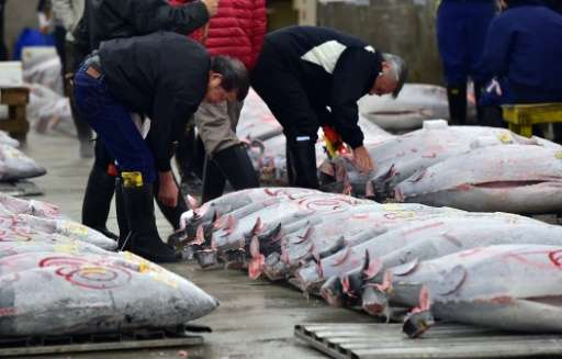 Fishmongers inspect frozen bluefin tuna before the first auction of the New Year at Tokyo's Tsukiji fish market, which will end