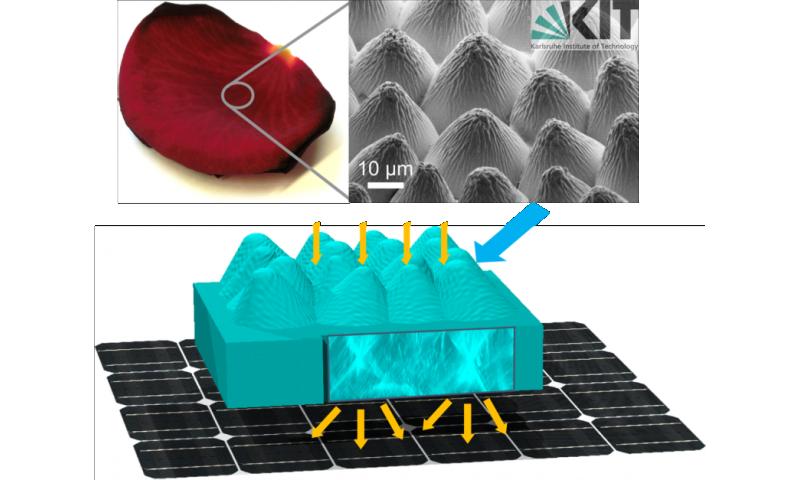 Flower power—photovoltaic cells replicate rose petals