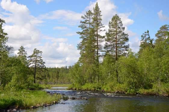 Forest and watercourse interplay important for restorations