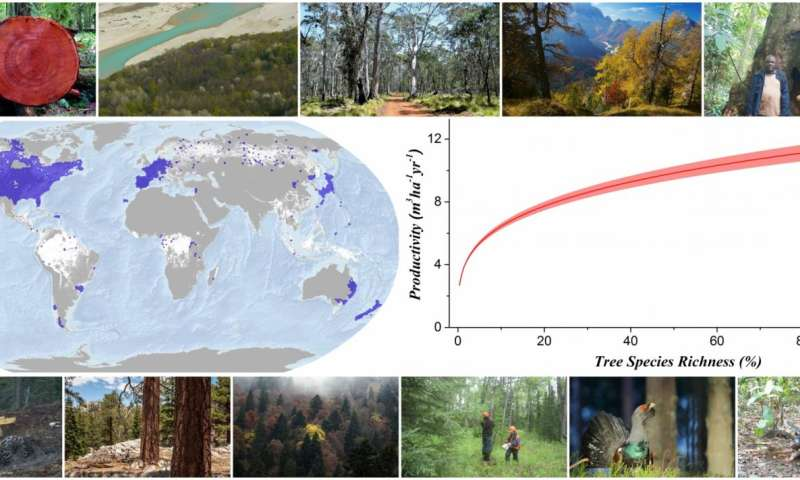 Forest scholars worldwide team up to show that biodiversity is green in more ways than one