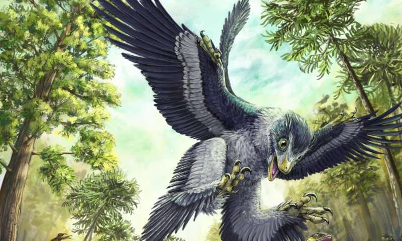 Fossil teeth suggest that seeds saved bird ancestors from extinction