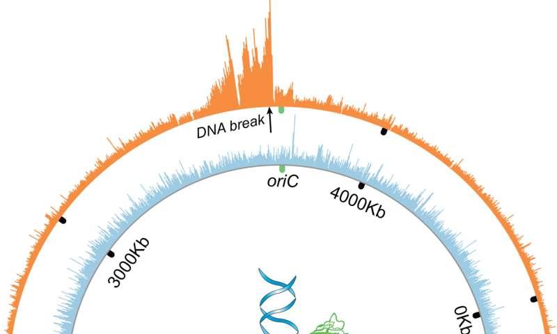 'Freeze-frame' proteins show how cancer evolves