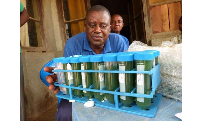 Full circle: space algae fighting malnutrition in Congo