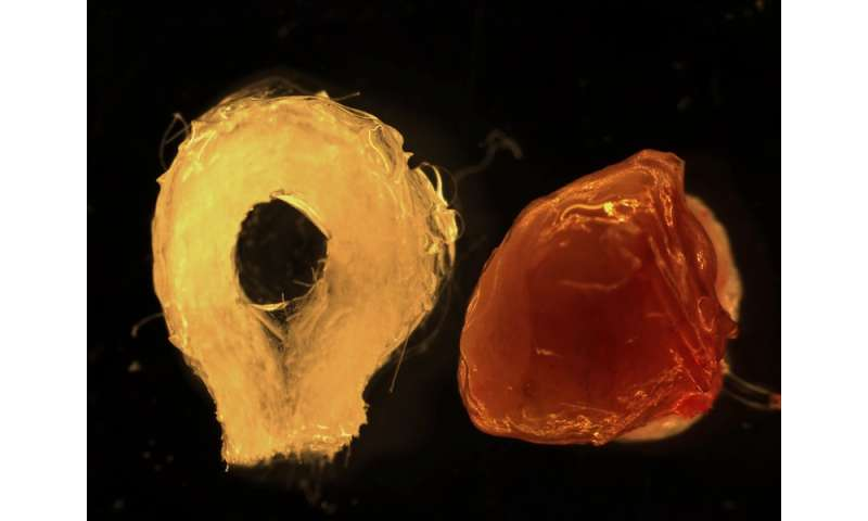 Functional human tissue-engineered liver generated from stem and progenitor cells