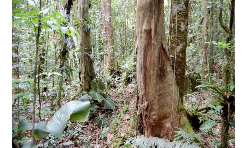Fungi are at the root of tropical forest diversity -- or lack thereof, study finds