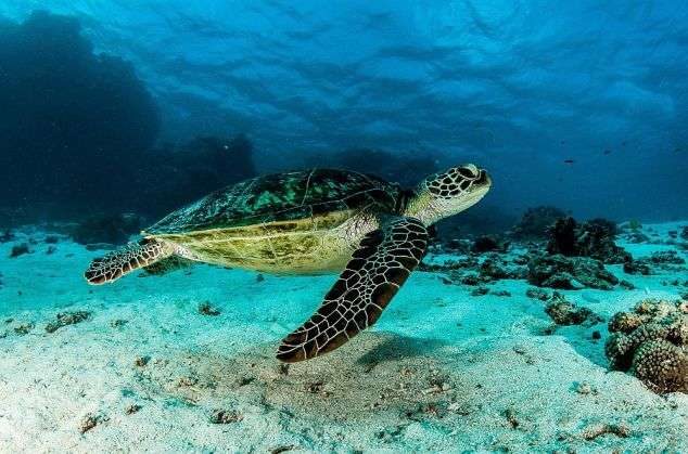 Gaps in reporting leave turtles vulnerable