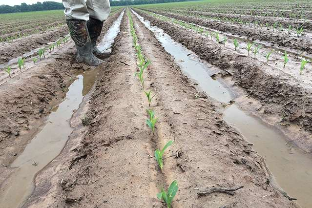 Gauging the impact of climate change on U.S. agriculture
