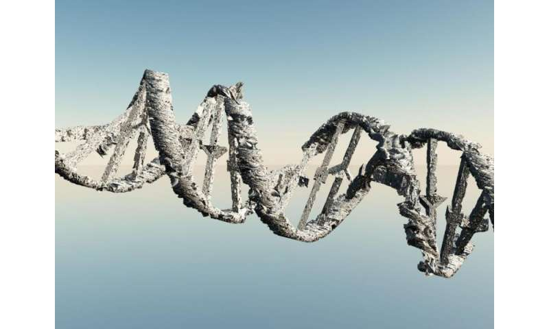 Gene switch may repair DNA and prevent cancer