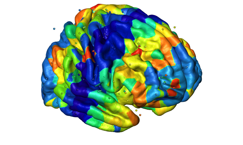 Genetic factors are responsible for creating anatomical patterns in the brain cortex