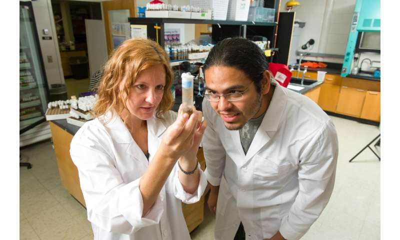 Get a clue: Biochemist studies fruit fly to understand Parkinson's disease, muscle wasting