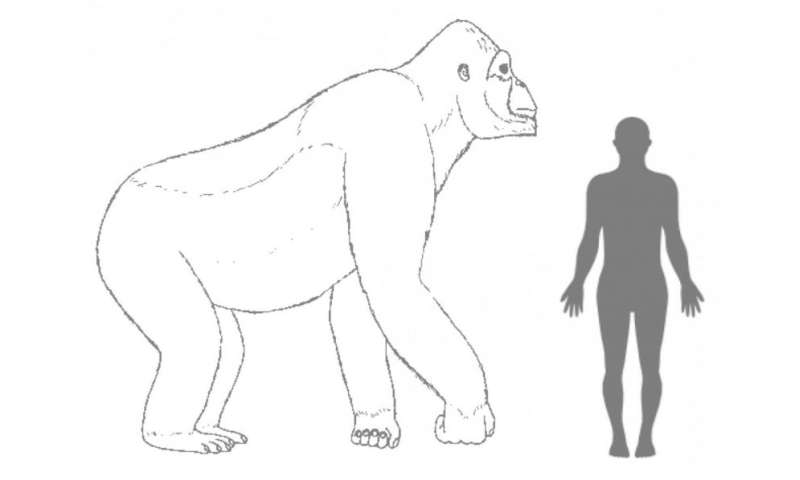 Giant ape Gigantopithecus went extinct 100,000 years ago, due to its inability to adapt