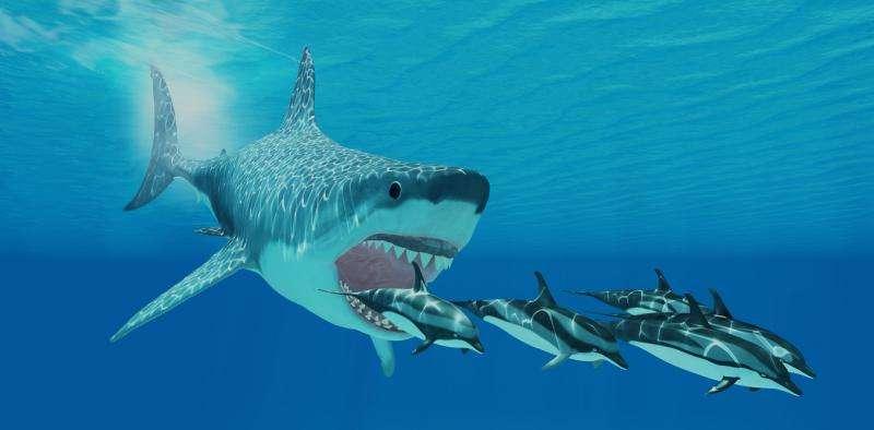 Giant Monster Megalodon Sharks Lurking In Our Oceans Be Serious