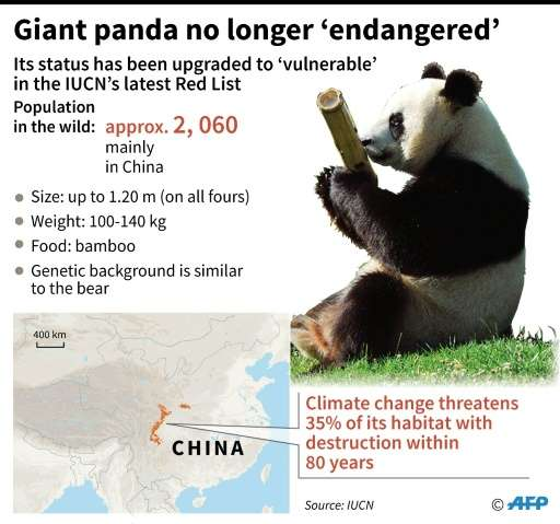 Giant Panda as it moves off the 'Endangered' list down to 'Vulnerable' in the latest Red List issued by the International Union
