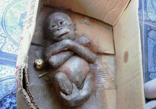 Gito inside a box following his rescue