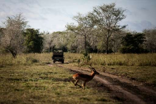 Gorongosa National Park has more than 72,000 animals from 20 different species, mainly antelopes and zebras