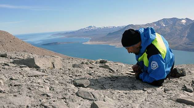 Greenland Fossils Reveal Global Ecosystem Recovery After Mass Extinction