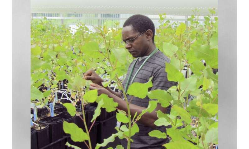 GreenWood Resources licenses ORNL invention to boost biofuel yield