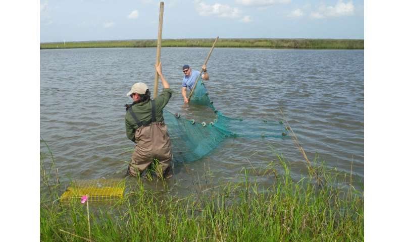 Gulf oil spill research featured in special issue