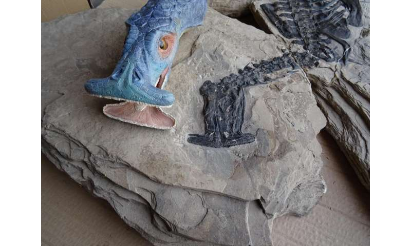 'Hammerhead' creature was world's first plant-eating marine reptile