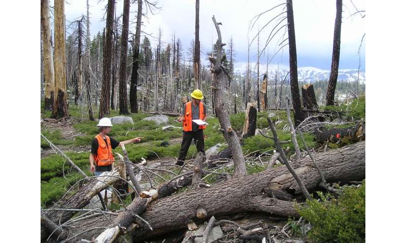High-severity wildfires complicate natural regeneration for California conifers