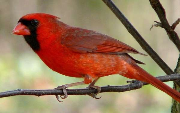 Highway noise deters communication between birds