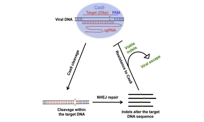 HIV can develop resistance to CRISPR/Cas9